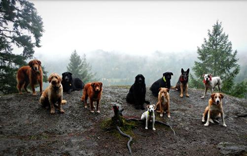 Fernie Off-leash dogs