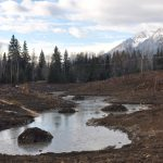 Hosmer Gravel Pit Transformed into Wetland