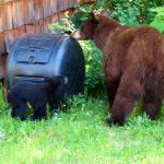 compost-bear