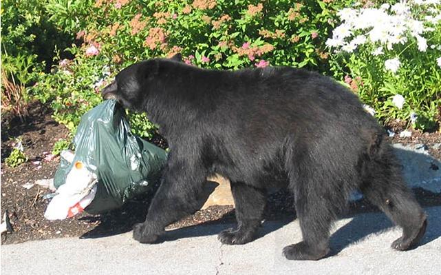 Fernie bear problem