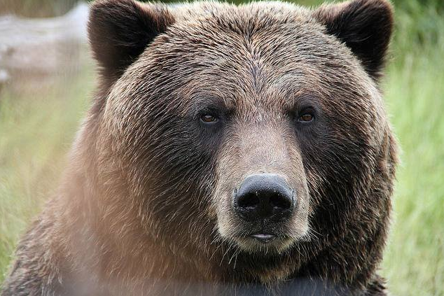 Information Night for South Rockies Grizzly Bear Project