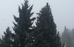 Lite snow fall
