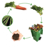Fernie Composting Pilot Project