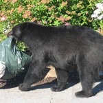Fernie Prohibits Garbage Bags