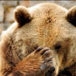 Fernie bears are emerging