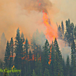 Fernie Fires Updated