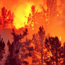 BC Wildfire advises Caution