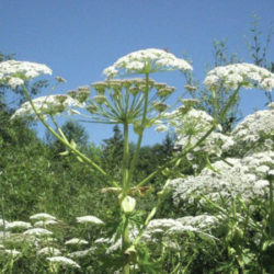 Local Management of Invasive Plants Showcased