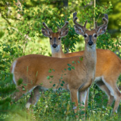 2020 Hunting and Trapping Regulations: a step in the right direction
