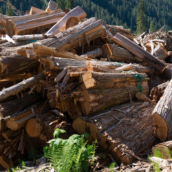 Old growth and forestry jobs in steep decline
