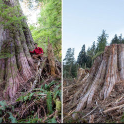 85% of British Columbians want Action for Old-growth Forests