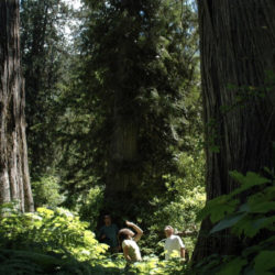 The Last Stand: Join the Provincial Day of Action on Old Growth