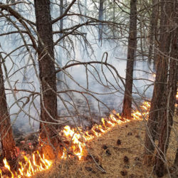 CBT Supports Fernie Wildfire Risk Reduction