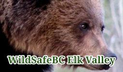 WildSafeBC Elk Valley